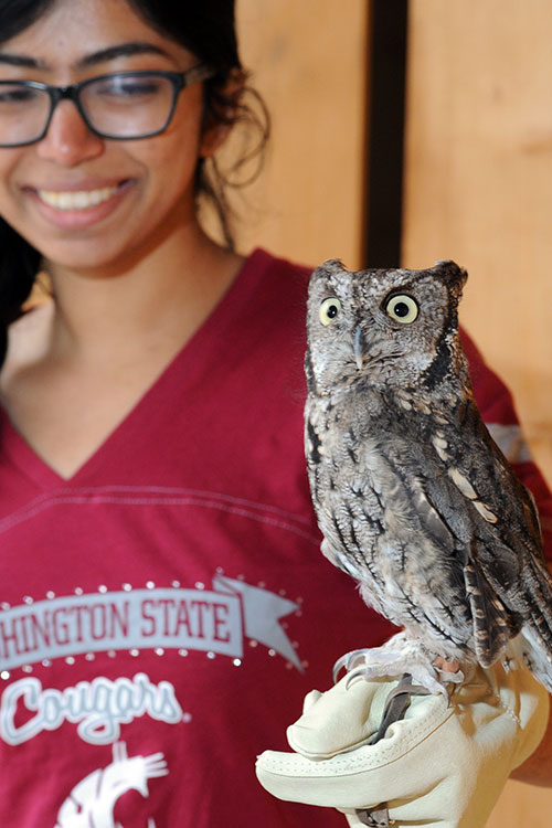 Kotori the Western Screech Owl and his handler.