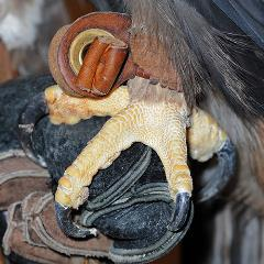 Amicus: close up of feet and talons