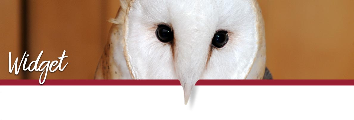 WSU Raptor Club page banner showing Widget the Barn Owl