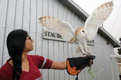 Widget: Barn Owl, wings