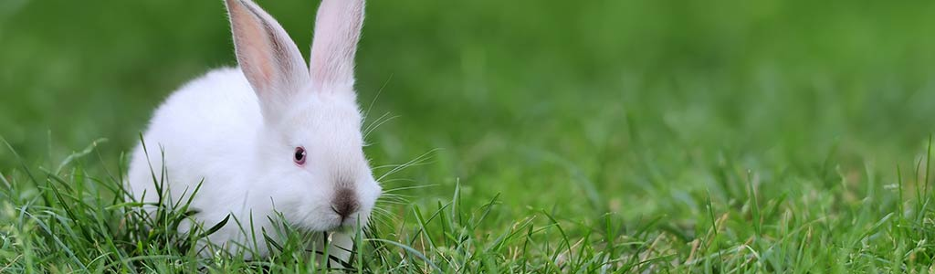 Is your bunny healthy