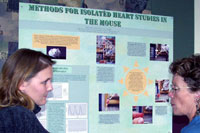 Isolated Heart Studies Mouse