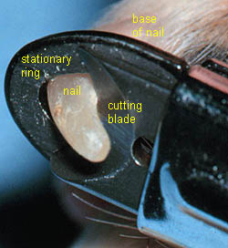 close-up of the guillotine type nail trimmer, including labeled parts