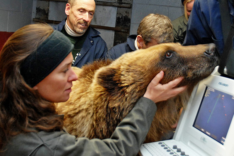 bear cardiac ultrasound