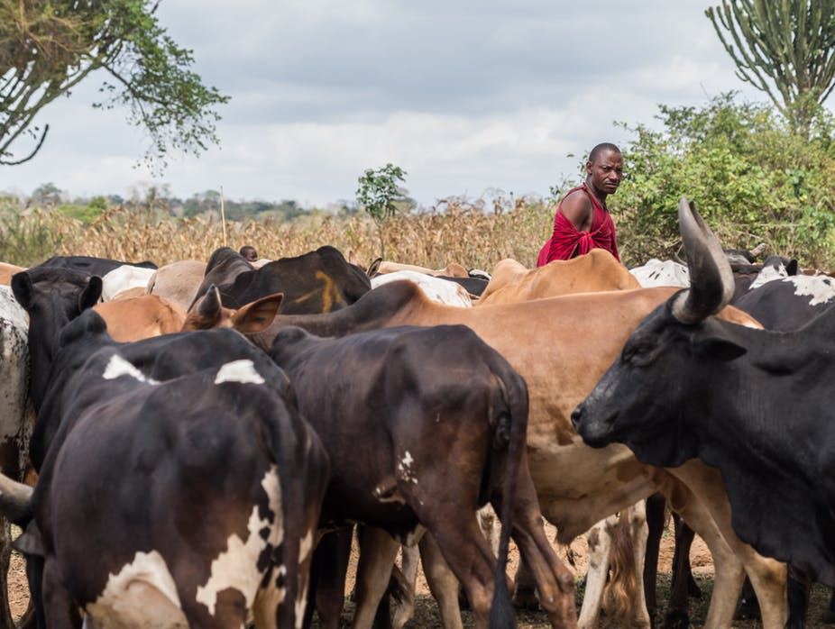 Foot-and-mouth disease is endemic to Tanzania