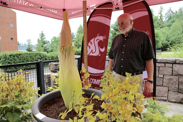 WSU-Vancouver-corpse-flower-with-Steve-Sylvester-CREDIT-Molly-Solomon-OPB